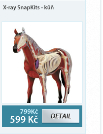 Anatomický model X-ray - kůň