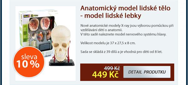 Anatomický model lidské tělo